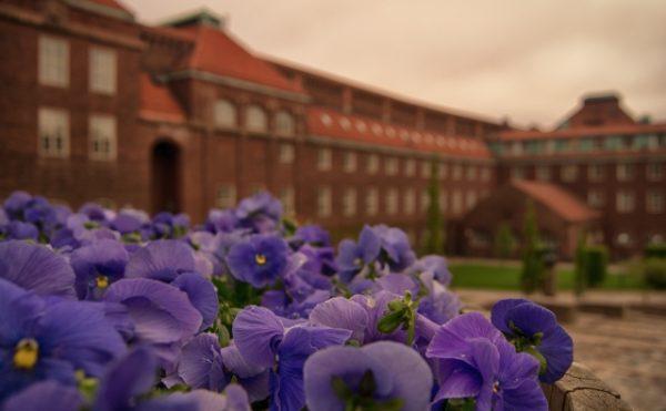 大学 キャンパス イメージ
